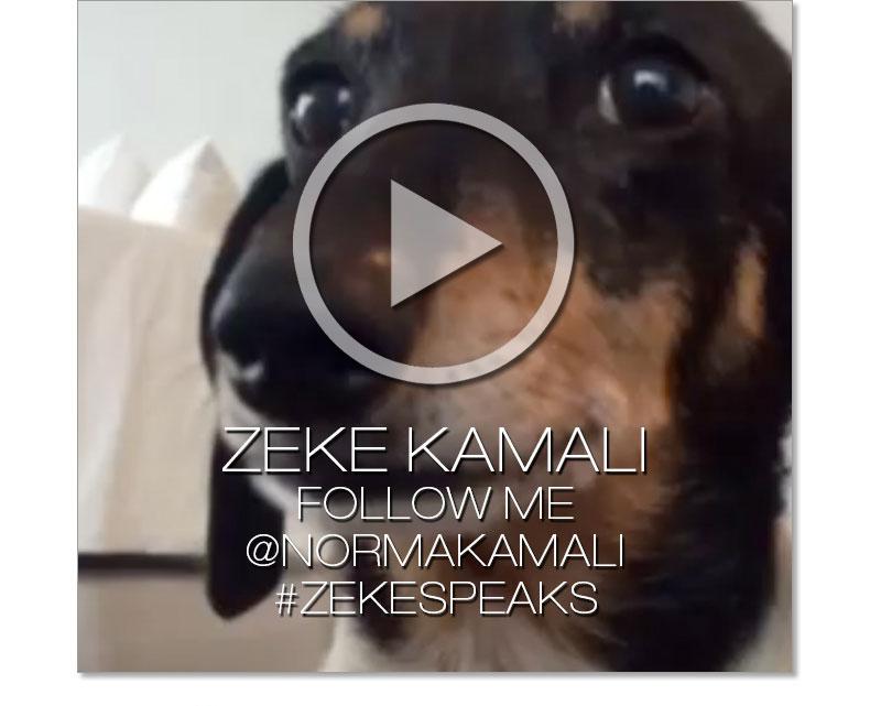 Zeke speaks